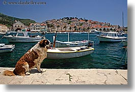 boats, croatia, dogs, europe, harbor, horizontal, hvar, st bernard, towns, photograph