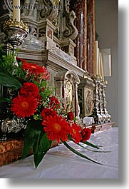 churches, croatia, europe, flowers, hvar, st stephan cathedral, vertical, photograph