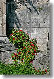 croatia, europe, flowers, korcula, vertical, photograph