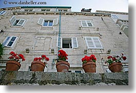 buildings, croatia, europe, flowers, geraniums, horizontal, korcula, potted, photograph