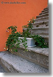 croatia, europe, flowers, korcula, stairs, vertical, photograph