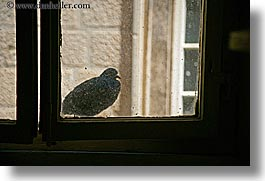 birds, croatia, europe, horizontal, korcula, windows, photograph