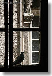 birds, croatia, europe, korcula, vertical, windows, photograph