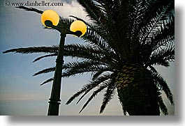 croatia, europe, horizontal, korcula, lamp posts, palm trees, palmtree, photograph
