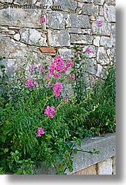 croatia, europe, flowers, milna, stones, vertical, walls, photograph