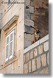 croatia, dogs, europe, ledge, milna, vertical, windows, photograph