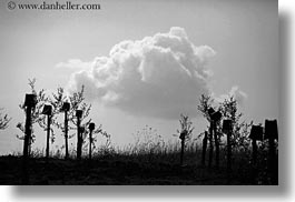 black and white, clouds, croatia, europe, horizontal, vines, photograph