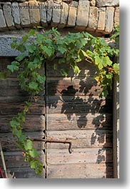 croatia, doors, europe, ivy, old, vertical, woods, photograph