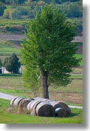 bales, croatia, europe, hay, landscapes, motovun, nature, scenics, trees, vertical, photograph
