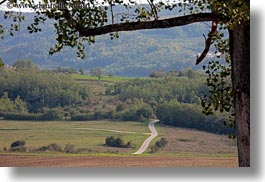 branches, croatia, europe, hills, horizontal, landscapes, motovun, nature, roads, scenics, trees, photograph