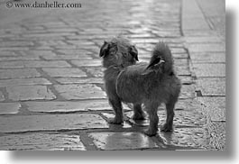 black and white, cobblestones, croatia, dogs, europe, horizontal, marble, materials, porec, sidewalks, small, stones, photograph