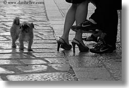 black and white, cobblestones, couples, croatia, dogs, europe, feet, horizontal, marble, materials, men, people, porec, sexy, small, stones, womens, photograph