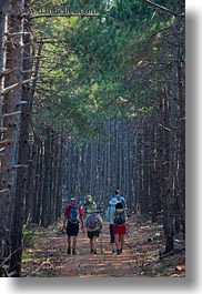 croatia, europe, forests, hikers, hiking, nature, people, pines, plants, rab, trees, vertical, photograph