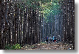 croatia, europe, forests, hikers, hiking, horizontal, nature, people, pines, plants, rab, trees, photograph