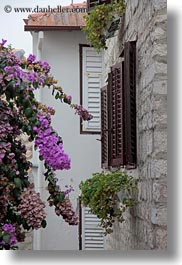 bougainvilleas, croatia, europe, rab, shutters, vertical, woods, photograph