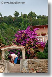bougainvilleas, croatia, europe, men, rab, vertical, photograph