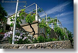 croatia, europe, flowers, gardens, grape vines, horizontal, houses, leaves, sipan, vines, photograph