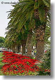 croatia, europe, flowers, palm trees, split, vertical, photograph