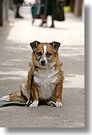 croatia, dogs, europe, sitting, split, vertical, photograph