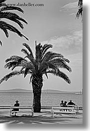benches, black and white, croatia, europe, palm trees, split, vertical, womens, photograph