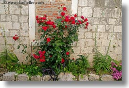 croatia, europe, flowers, horizontal, trogir, photograph