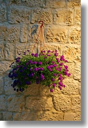 croatia, europe, flowers, glow, lights, trogir, vertical, photograph