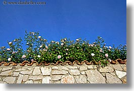 croatia, europe, horizontal, roses, ugljan, walls, photograph