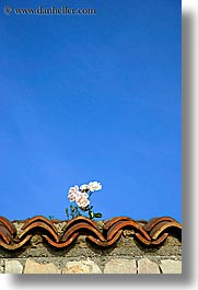 croatia, europe, roses, ugljan, vertical, walls, photograph