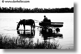 black and white, bohemia, czech republic, europe, horizontal, horses, water, photograph