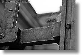 black and white, czech republic, europe, horizontal, prague, spider, web, photograph