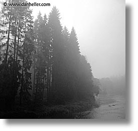 czech republic, europe, foggy, square format, sumava forest, trees, photograph