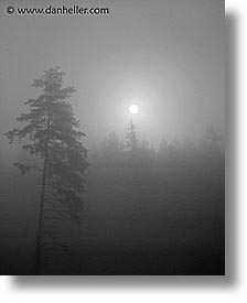 czech republic, europe, foggy, sumava forest, trees, vertical, photograph