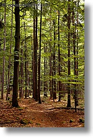 czech republic, europe, forests, sumava forest, vertical, photograph