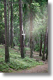 czech republic, europe, jesus, sumava forest, trees, vertical, photograph