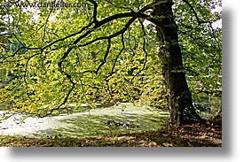 czech republic, europe, horizontal, shady, sumava forest, trees, photograph