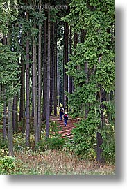 czech republic, europe, hiking, sumava forest, vertical, woods, photograph