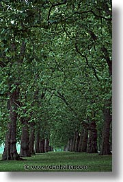 cities, england, english, europe, hyde, hyde park, london, park, trees, united kingdom, vertical, photograph