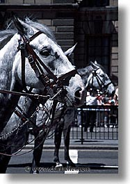 cities, england, english, europe, horses, london, streets, united kingdom, vertical, photograph