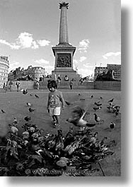 cities, england, english, europe, london, pigeons, traf, trafalgar, united kingdom, vertical, photograph