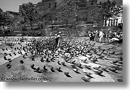cities, england, english, europe, horizontal, london, pigeons, traf, trafalgar, united kingdom, photograph