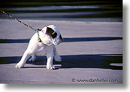 cannes, dogs, europe, france, horizontal, photograph