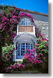 cannes, europe, flowers, france, vertical, windows, photograph