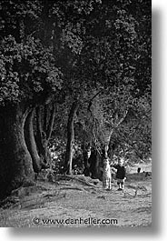 black and white, cauria, childrens, corsica, europe, france, trees, vertical, photograph