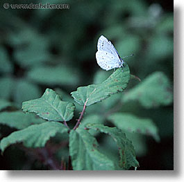 butterflies, corsica, europe, france, square format, photograph
