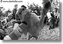black and white, corsica, dogs, europe, france, horizontal, play, photograph