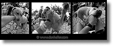 corsica, dogs, europe, france, horizontal, panoramic, play, triptych, photograph