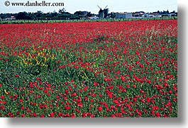 europe, farm, flowers, france, horizontal, ile de re, photograph