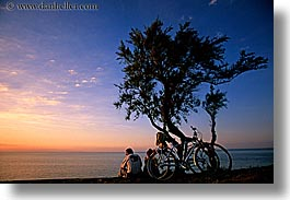 bicycles, bikes, europe, france, horizontal, ile de re, sunsets, trees, water, photograph