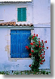 europe, flowers, france, ile de re, roses, vertical, windows, photograph