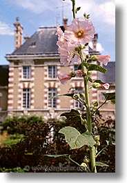 buildings, castles, europe, flowers, france, loire valley, vertical, photograph